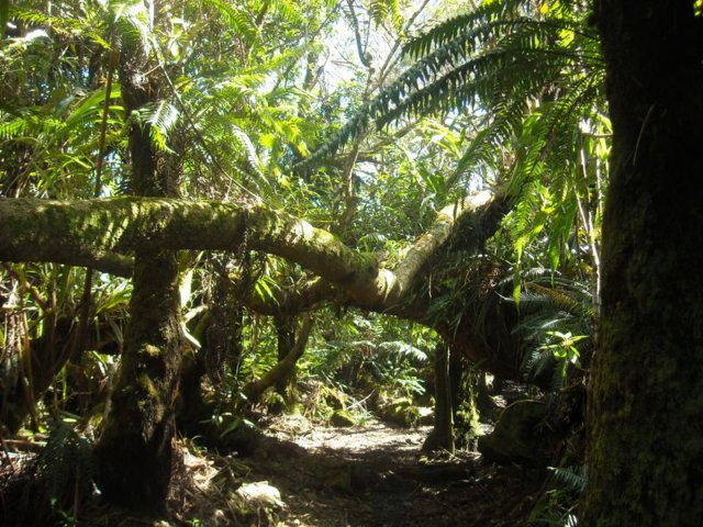 GrandRaidReunion2010, fort de belouve